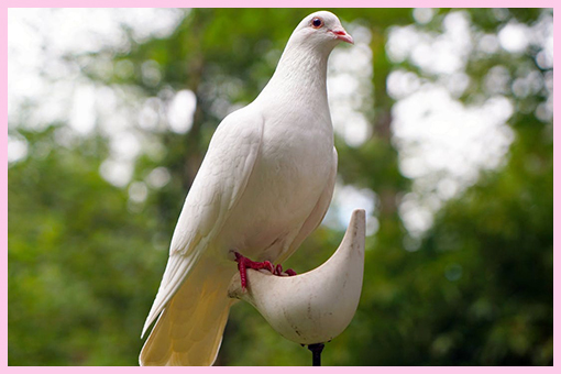 Doves Flight €140